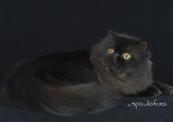Olania's Tee Nhu R. Cat